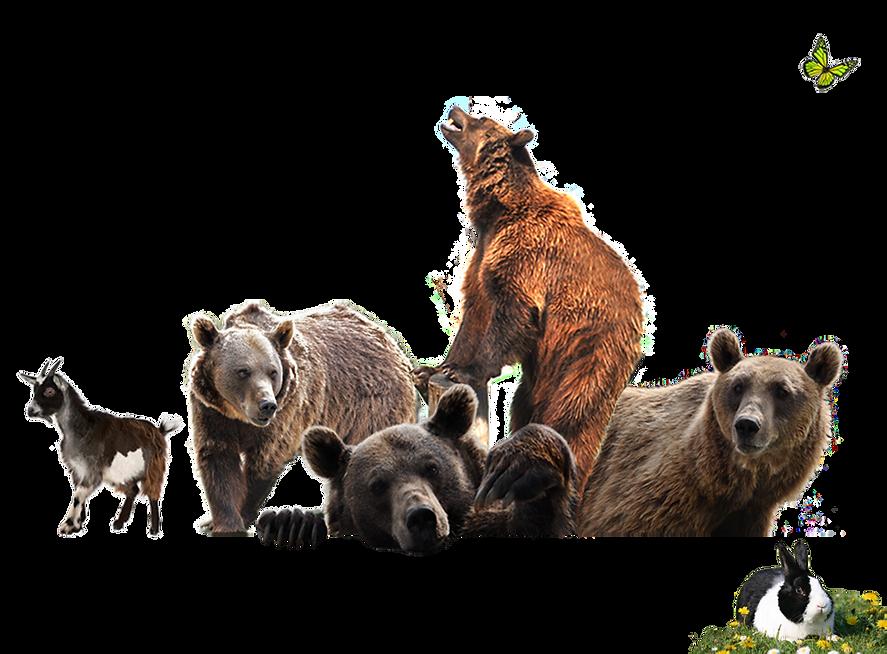 Die Bärenbande von Berghausen