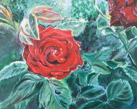 Elin's Rose