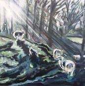 Early Morning Sheep and Lambs