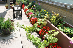 rooftop gardens at Southwest Centre