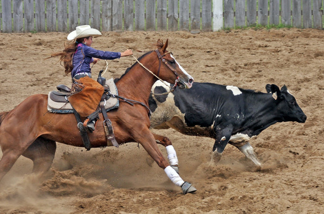Ontario Reined Cow Horse Competition