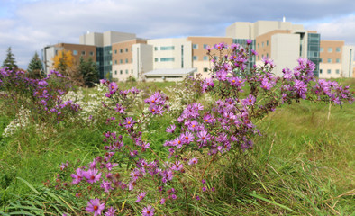 Parkwood Institute backs onto beautiful green space