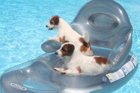 Dog Boarding Perth