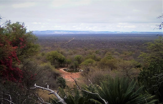 Waterhole visible from the lodge.jpg