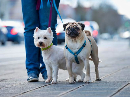 Can I Walk My Dog During A Pandemic? Addressing U.S. Coronavirus Concerns