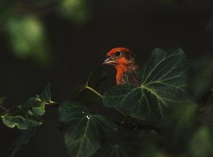 CC-Blog-wildlifeimage2.jpg