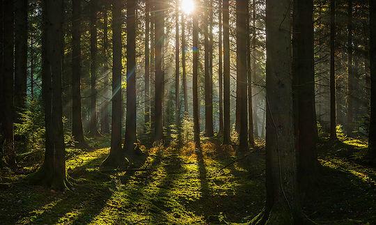 forest_photo.jpg