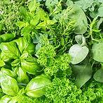 424107-Herbs.jpeg