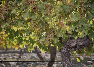 italienska-viner-örebro-sörens-vedugn