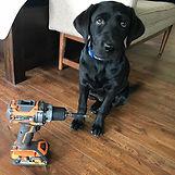 drilldog.jpg