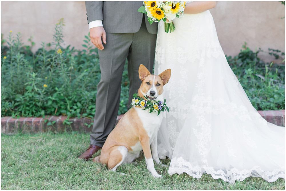Wedding at Los Poblanos. Summer wedding New mexico. Outdoor wedding venue albuquerque. New Mexico Wedding Photographer. dogs at weddings