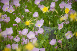 ballerina_brides_botanical_gardens_0020.jpg