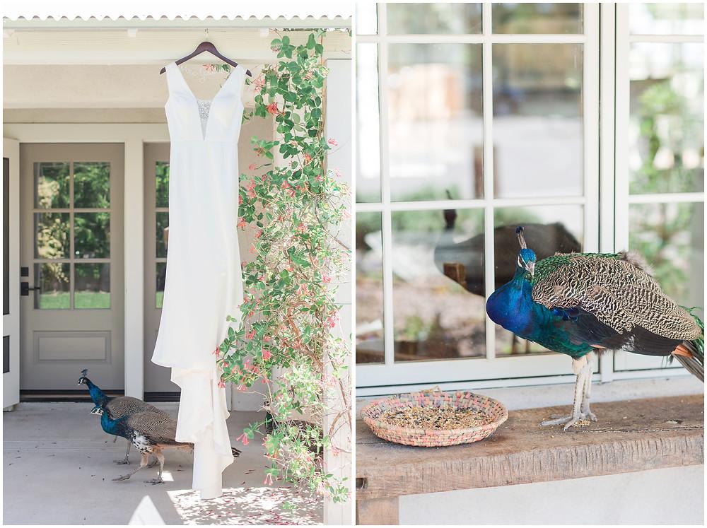 Animals at Weddings. Los Poblanos Wedding Venue. Albuquerque Wedding Photographer. New Mexico Wedding Photographer. Los Poblanos Lavender Farm. Peacock Wedding.