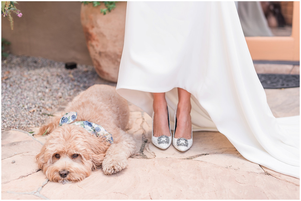 Dogs at weddings. La Posada Wedding. La Posada Santa Fe. Santa Fe Wedding. New Mexico Wedding. Santa Fe Wedding Photographer. New Mexico Wedding Photographer. Labradoodle. Elegant Bride. Wedding Inspiration. Furbabies at Weddings.