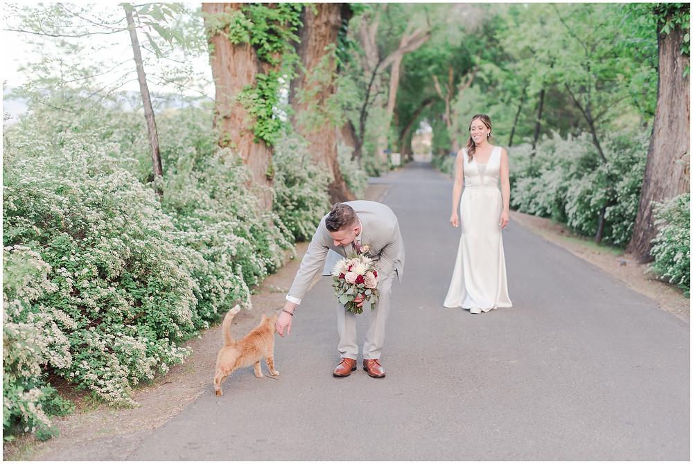 Pets at Weddings. Albuquerque Wedding vENUE. Los Poblanos Wedding Venue. Albuquerque Wedding Photographer. New Mexico Wedding Photographer. Los Poblanos Lavender Farm.