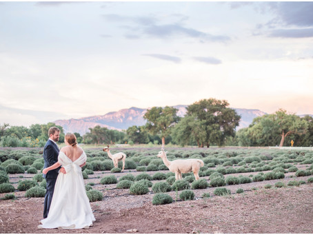 One of our Favorite Trends: Animals at Weddings | Albuquerque Wedding Photographers