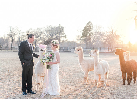 Pets at Weddings | Having Your Fur Babies at Your Big Day | Albuquerque Wedding Photographers