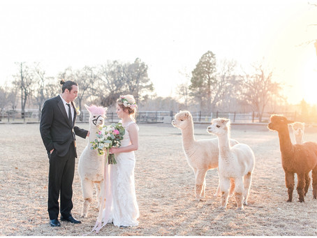 Pets at Weddings   Having Your Fur Babies at Your Big Day   Albuquerque Wedding Photographers