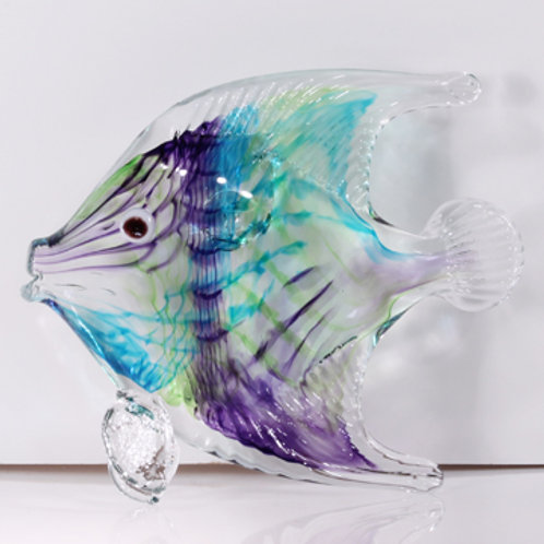 Angelfish purple-lime-aqua