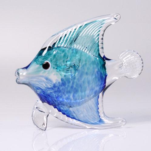 Angelfish teal-blue (bottom-top)