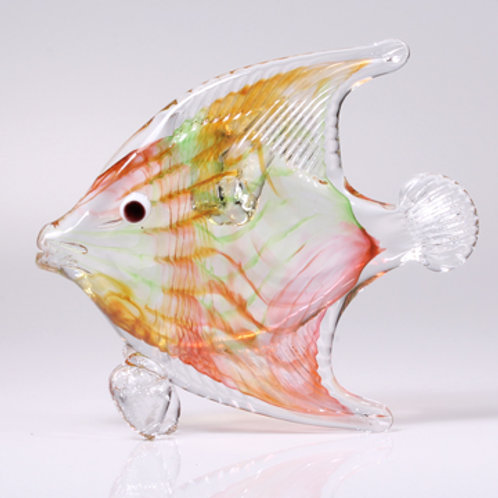 Angelfish orange twist