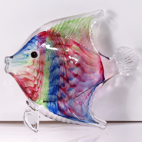 Angelfish rainbow twist