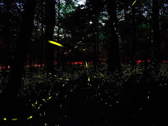 Fireflies and Glo!
