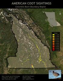 American Coot Sightings in Columbia Basin-Boundary