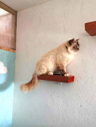 Box pension chat Terre de Légendes 53 Mayenne