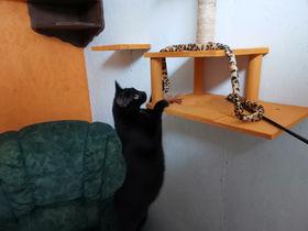 Chat en pension Terre de Légendes