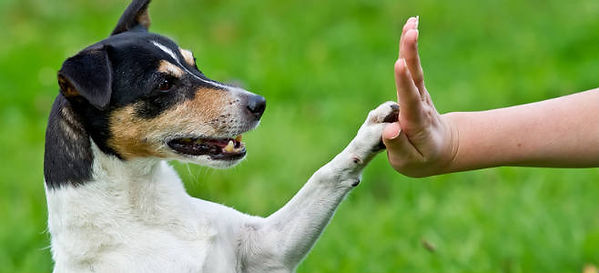 bonne relation chien education chien