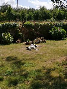 Petsitting garde à domicile chien chat Terre de Légendes 53 Mayenne