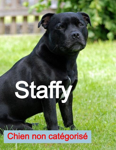 staffordshire-bull-terrier_edited.jpg