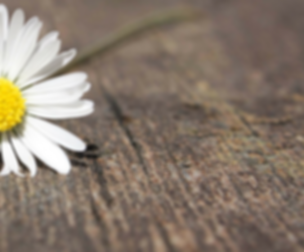 daisy-75191_1920_edited.png