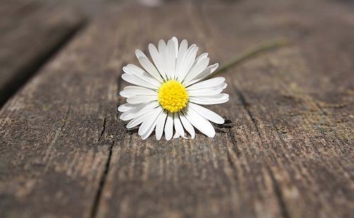Spazio SoStare_flower