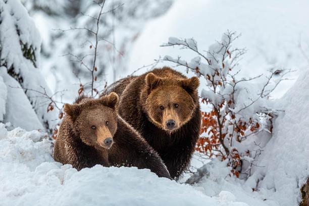 Tendresse animale ©Philippe Krucker et Annie Stevens