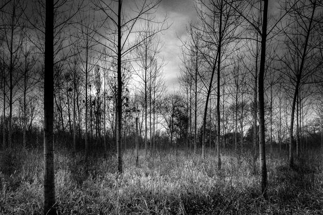 Le bosquet ©Ronan Jegaden