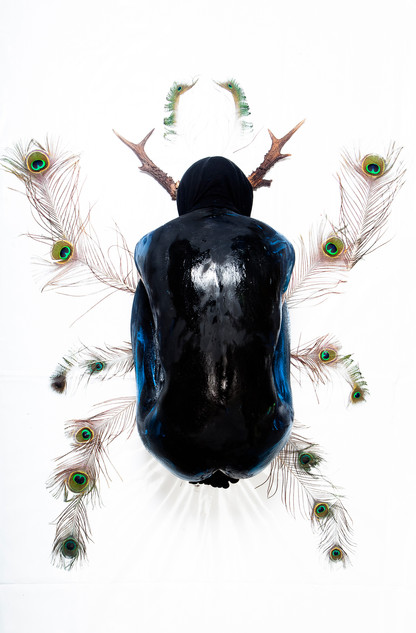 Le scarabée noir ©Aurélie Fontan
