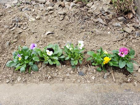 お花を植えていただきました🌹