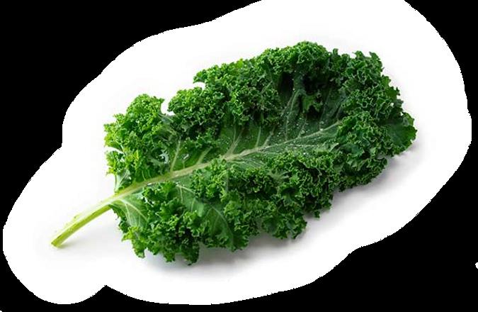 Kale%20leaf_edited.png