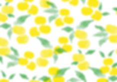 草花木果,sokamocka,株式会社キナリ,株式会社ヒダマリ,HIDAMARILtd,HIDAMARI,草花木果,sokamocka,ロゴ,関本明子,akikoskimoto,パッケージ,package
