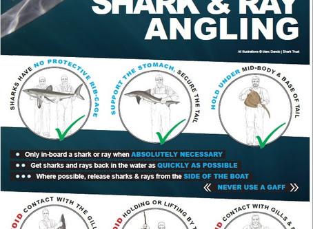 May: Shark Trust Best Practice Poster