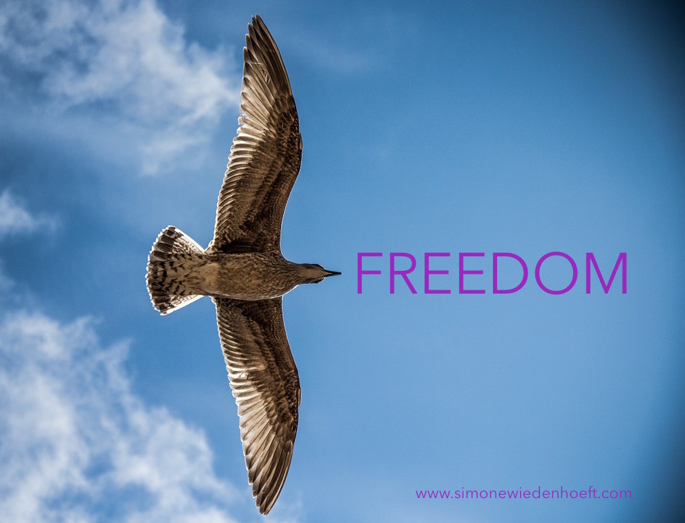 Sea gull flying in the sky, with text: Freedom.