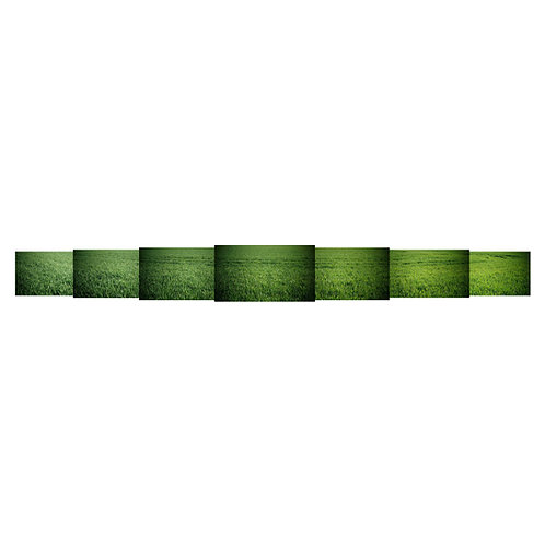 Vert / Blés