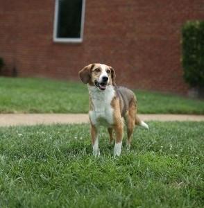 Dog Belle 1.jpg