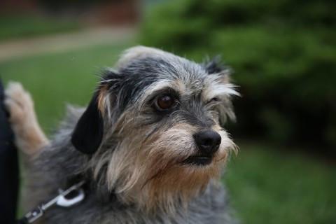 Dog Scruffy 2.jpg