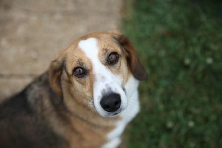 Dog Belle 2.jpg