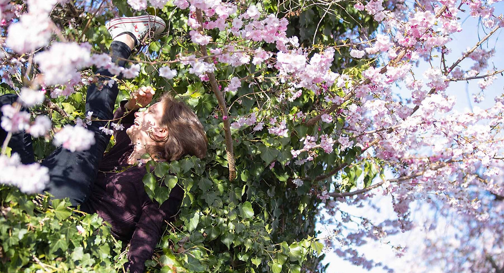 Aerialist Cherry Blossom Photography