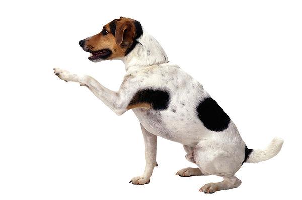 dog-1383342.jpg