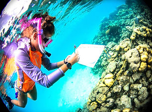 A snorkeller wearing colourful rashwear writing notes on a dive slate about coral she swims over